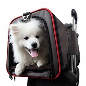 pet carrier for international removal