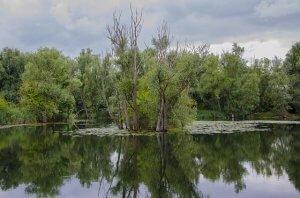 Lake in Richmond park in London
