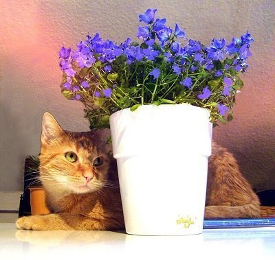 cat and plant moving to London