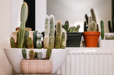 moving with houseplants