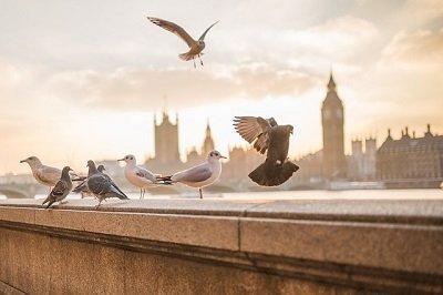 London international removal services