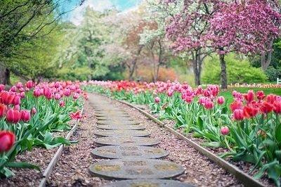 flower garden in London