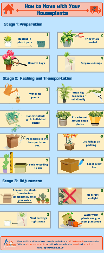 How to relocate with a houseplant