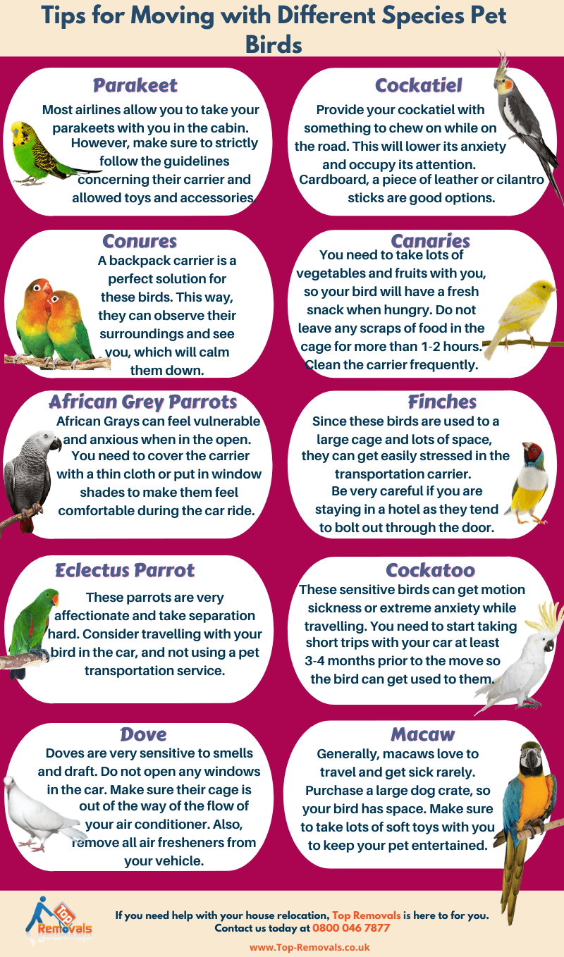 tips for relocating with pet birds